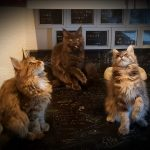 Kitten A-Wurf