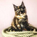 Kitten D-Wurf