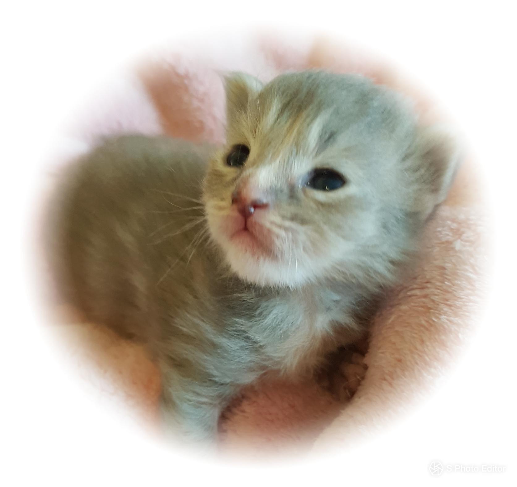Kitten B-Wurf