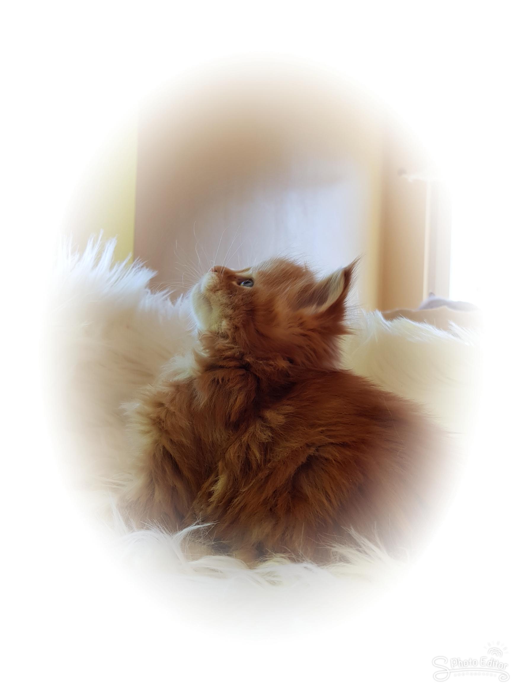 Kitten C-Wurf